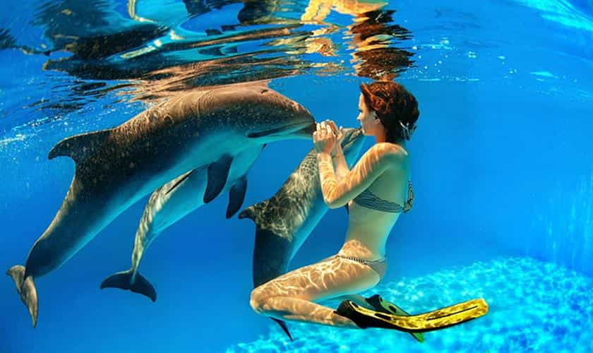 Swimming with dolphins in Mauritius